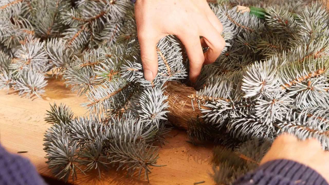 Beim Binden des Adventskranzes müssen die letzen Tannenzweige unter die ersten gesteckt werden