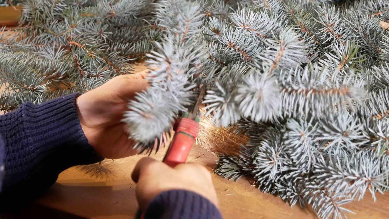 Um einen Adventskranz selber zu binden werden die Spitzen der Tannenzweige genommen