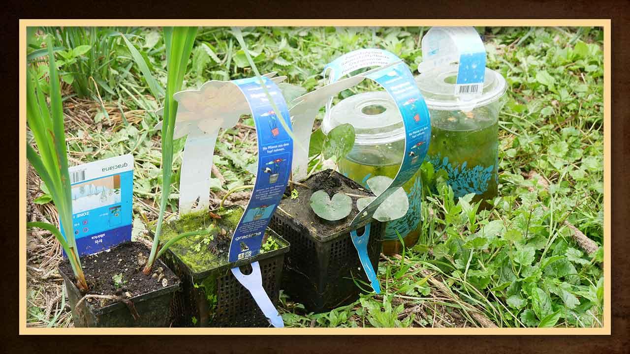 Wasserpflanzen erhältst du im örtlichen Baumarkt oder Gartengeschäft