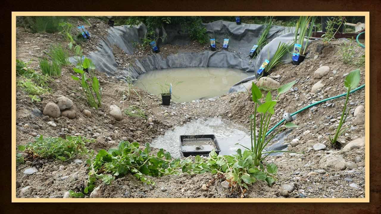 Die Wasserpflanzen müssen je nach Art im Teich angebracht werden